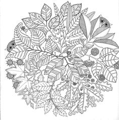 Secret Garden: French colouring book to alleviate stress... I really like this design of leaves, seeds & a couple of owls peeping out! :D #foliage #circle #illustration