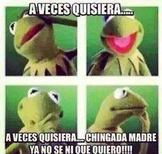 Meme de la Rana Rene  LA RANA  Pinterest