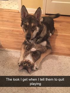 37 Hilarious Animal Snaps to Help Restore Your Faith in Humanity - Cheezburger