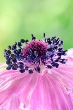 Bridal Bouquet | Flickr - Photo Sharing! / pink-purple macro flower