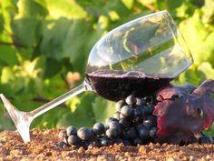 La producción de vino data de 8 mil años antes de Cristo en la región de Medio Oriente.