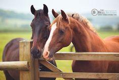 "scarlettjane22: "" Horses - Day 94/260 by Sasha L'Estrange-Bell on Flickr """