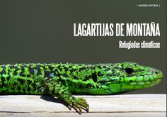 Es Madrid no Madrid Magazine Fauna, Madrid, Natural, Animals, Summer, Animais, Animales, Animaux, Animal
