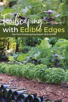 Edible edges are easy! Pop in edible plants that look decorative and provide harvestable crops along the edges of the garden for an attractive foodscape. Make your vegetable garden part of the ornamental garden. Edible Plants, Edible Garden, Easy Garden, Garden Ideas, Flower Landscape, Garden Landscape Design, Vegetable Garden, Garden Plants, Potager Garden