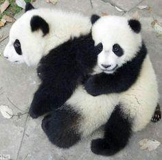 I love you panda friend.
