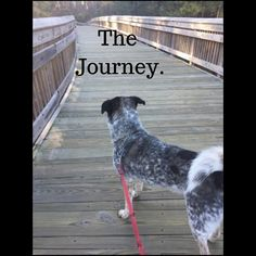 Morning Motivation-God Directs Our Path - Kathiey V Writer Monday Morning Motivation, Proverbs 3 5 6, Paths, Journey, God, Adventure, Feelings, Divorce, Trust