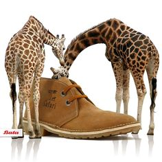 "Safari Boots by Bata celebrating it's anniversary and still ""The boots that say you know Africa"" Bata Shoes, Men's Shoes, Shoe Collection, Fashion Boots, Moccasins, Uggs, Safari, Oxford, Africa"