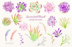 Watercolor Clip Art Succulent Plant by Corner Croft on @creativemarket