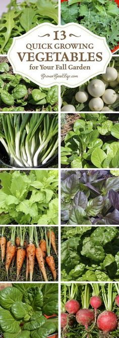 Growing fall vegetables in colder climates can be a gamble, but these crops mature quickly so you can grow more food in your fall garden. #diyvegetablegarden