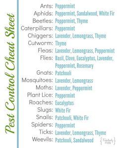 essential oils https://www.facebook.com/gorgeouslygreen/photos/a.192714244120377.48321.167459623312506/1084645111593948/?type=3