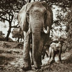 Gorgeous Elephant Photo by Will Burrard-Lucas