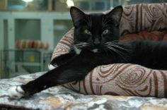 Tucker is an adoptable Domestic Short Hair Mix in  Myrtle Beach, SC! He needs a new forever home!