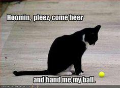 Hoomin, pleez come heer and hand me my ball.