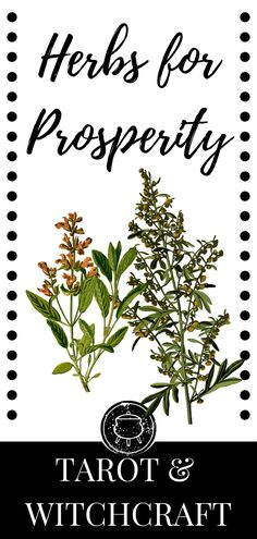 Herbs for prosperity and abundance. Which herbs should you use in an abundance spell? Witchcraft for beginners. Herbs for witchcraft. Wicca For Beginners, Tarot Cards For Beginners, Witchcraft For Beginners, Herbal Witch, Witch Herbs, Herbal Magic, Witchcraft Herbs, Green Witchcraft, Prosperity Spell