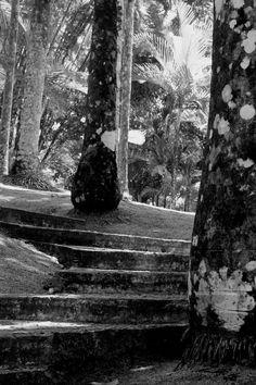"""Photographie noir et blanc """"les marches"""" martinique, mai 2015 : Photos par le-petit-bazar-des-trinomettes-en-delire"""