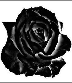 ✯*•.*☆° The Black Rose °☆*.•*✯