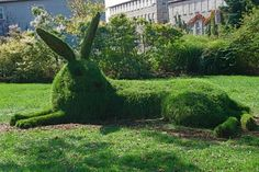 The Great Hare
