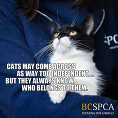 Is this true for you and your cat as well? Find adoptable Nathalie at the BC SPCA Shuswap Branch, ready to adopt you as her human.