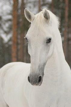 Free Gift with Horse White Princess Canvas Wall Art for Home Decoration by Startonight 23.62 x 35.43 in Startonight http://www.amazon.com/dp/B00BK6NMXU/ref=cm_sw_r_pi_dp_p.v1vb1J5GCM0