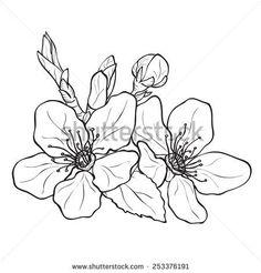 Cherry Flower Stock Vectors & Vector Clip Art | Shutterstock