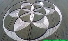 POLAND: Crop Circle appears in a field between Strzelno and Markowicami