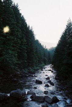 River through a forest of pines