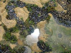 Visit the tide pools at Cardiff State Beach Tide Pools, then spend the rest of the day at the beach!