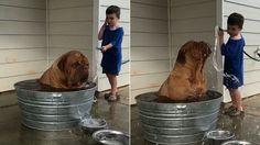 Isaiah the dog enjoys a nice cold bath on a hot summer day.