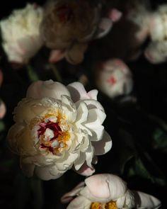 Flower Centerpieces, Flower Arrangements, Floral Bouquets, Cherry Blossom, Peonies, Floral Design, Bloom, Crown, Flowers