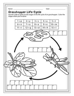 Life Cycle of A Cricket/Grasshopper Grasshoppers are