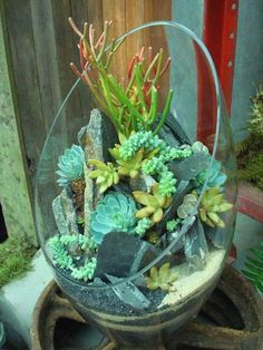 Then I could use those long stem succulents
