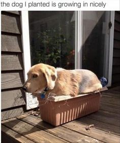 the dog I planted is growing in nicely