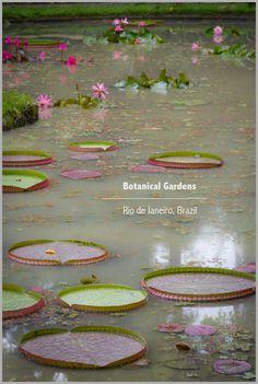 Botanical Gardens in Rio de Janeiro Brazil