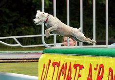 Get more training tips: http://dogtraining-r819fmgp.canitrustthis.com