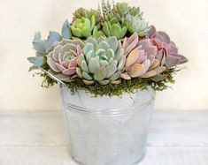 Succulent Wedding Cakes, Succulent Gifts, Succulent Arrangements, Wedding Arrangements, Succulents In Containers, Planting Succulents, Host Gifts, Garden Shop, Garden Boxes