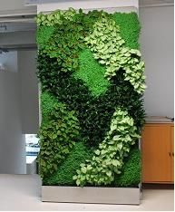 Vertical Gardens Another example of how plants with contrast can help you in creating your own aesthetic designs! Jardin Vertical Artificial, Vertikal Garden, Vertical Green Wall, Vertical Planting, Floral Backdrop, Interior Garden, Aesthetic Design, Plant Wall, String Garden