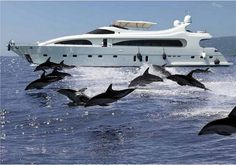 One reason or travel travel on water on a Luxury yacht & Dolphins, caribbean luxury yacht charter Yachting Club, Cool Pictures, Cool Photos, Grand Luxe, Float Your Boat, Yacht Boat, Yacht Design, Super Yachts, Tall Ships