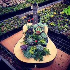 9 Ideas For Upcycling Guitar Into Things That You'll Need 9 Ways To Upcycle Old Guitars Into Things Guitar Crafts, Guitar Diy, Succulent Display, Succulent Arrangements, Succulents In Containers, Succulents Garden, Container Flowers, Container Plants, Guitar Decorations