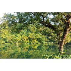 【uutatta】さんのInstagramをピンしています。 《三年前の今頃の季節に訪れた新潟県糸魚川市#ヒスイ峡 の#立浪の池 。 ヒスイ峡が好きで何度も旅したけど娘が生まれてからまだ行けてなくて、ふと写真を見てたら懐かしくなり。 この池には体長4メートルの鯉が棲んでいるという目撃もあり、一度見てみたいなぁと何度も足を運んだのです。湖畔はキャンプ場なので家族でキャンプに行きたいな。 #思い出#池#秋#山#森#緑#森#自然#輝き#きれい#素敵#アート#風景#鏡#木#過去#art#autumn#forest#memories#pond#landscape#scenery#amazing#nature#tree#instagood》