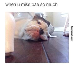 Dog memes When you miss bae so much...