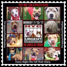TO BE DESTROYED 07/10/17 - - Info    To rescue a Death Row Dog, Please read this:http://information.urgentpodr.org/adoption-info-and-list-of-rescues/   To view the full album, please click here: http://nycdogs.urgentpodr.org/tbd-dogs-page/ -  Click for info & Current Status: http://nycdogs.urgentpodr.org/to-be-destroyed-4915/