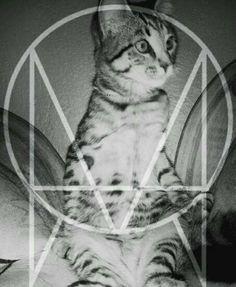Ese gato tiene el flow jajajaja xD Dubstep, Marvel, Amazing, Animals, Life, Skrillex, Gatos, Animales, Animaux