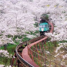 Japan Cherry Blossom 2021 Forecast The Dates Top 10 Best Places To See Cherry Blossoms In Japan Living Nomads Travel Tips Guides News Information In 2021 Scenic Train Rides Train Rides Travel