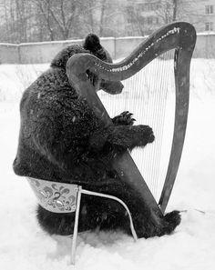 Bear playing a harp.