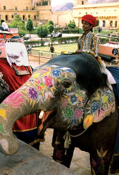 Jaipur - A elephant safari at the forest reserve of Dera Amer - http://www.abercrombiekent.com.au/india/itineraries/india-the-jaipur-literature-festival-with-claire-scobie-an-ak-hosted-journey.cfm