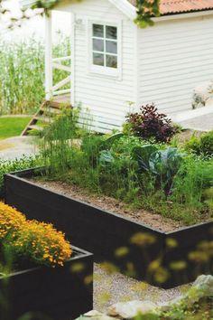 Landscape Design: 10 Gardens Transformed by Raised Beds victoria-skoglund-raised-garden-beds-black-Gardenista Raised Vegetable Gardens, Vegetable Garden For Beginners, Raised Garden Beds, Raised Beds, Raised Gardens, Vegetable Gardening, Raised Planter, Veggie Gardens, Gardening Hacks