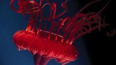 deep sea life photos | ... creatures provide clue to deep sea life at Osprey Reef | News.com.au