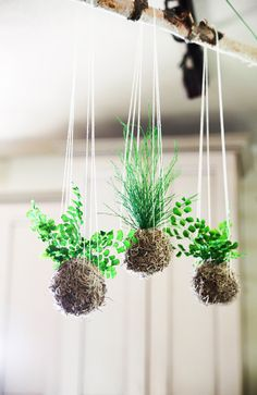 Set of 3- Tan Spanish Moss Ball. Hanging Kokedama String Garden. Care Free, Real Preserved Plants. by ArtisanMoss on Etsy