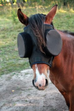 "Hanna's Pony ""Mercedes"" wearing the Standard Guardian Mask with 95% Sunshades. Sweden  www.horsemask.com"