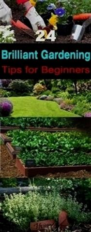 Gardenforbeginners When you started If you recently started . - Garden Care, Garden Design and Gardening Supplies Organic Gardening, Wildflower Garden, Gardening Supplies, Organic Gardening Tips, Hydroponics, Gardening For Beginners, Container Gardening, Garden Design, Gardening Tips